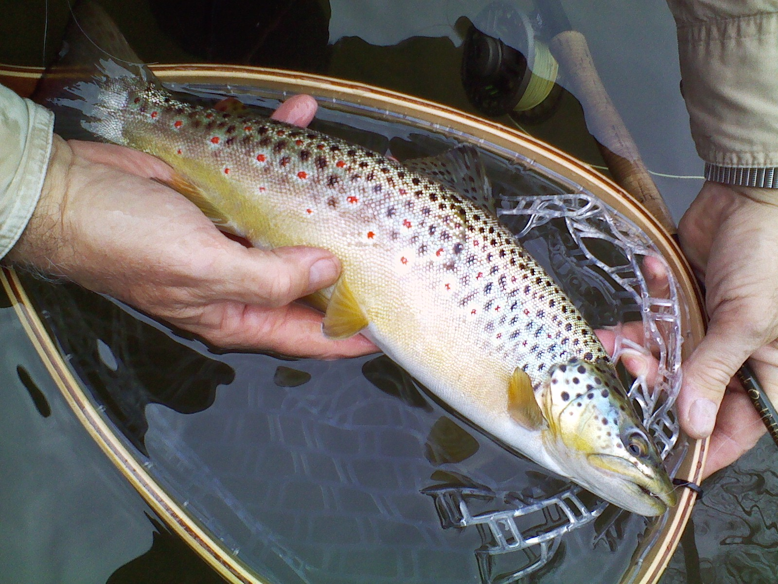Best fly fishing in the northeast trout haven for Best fishing in pa