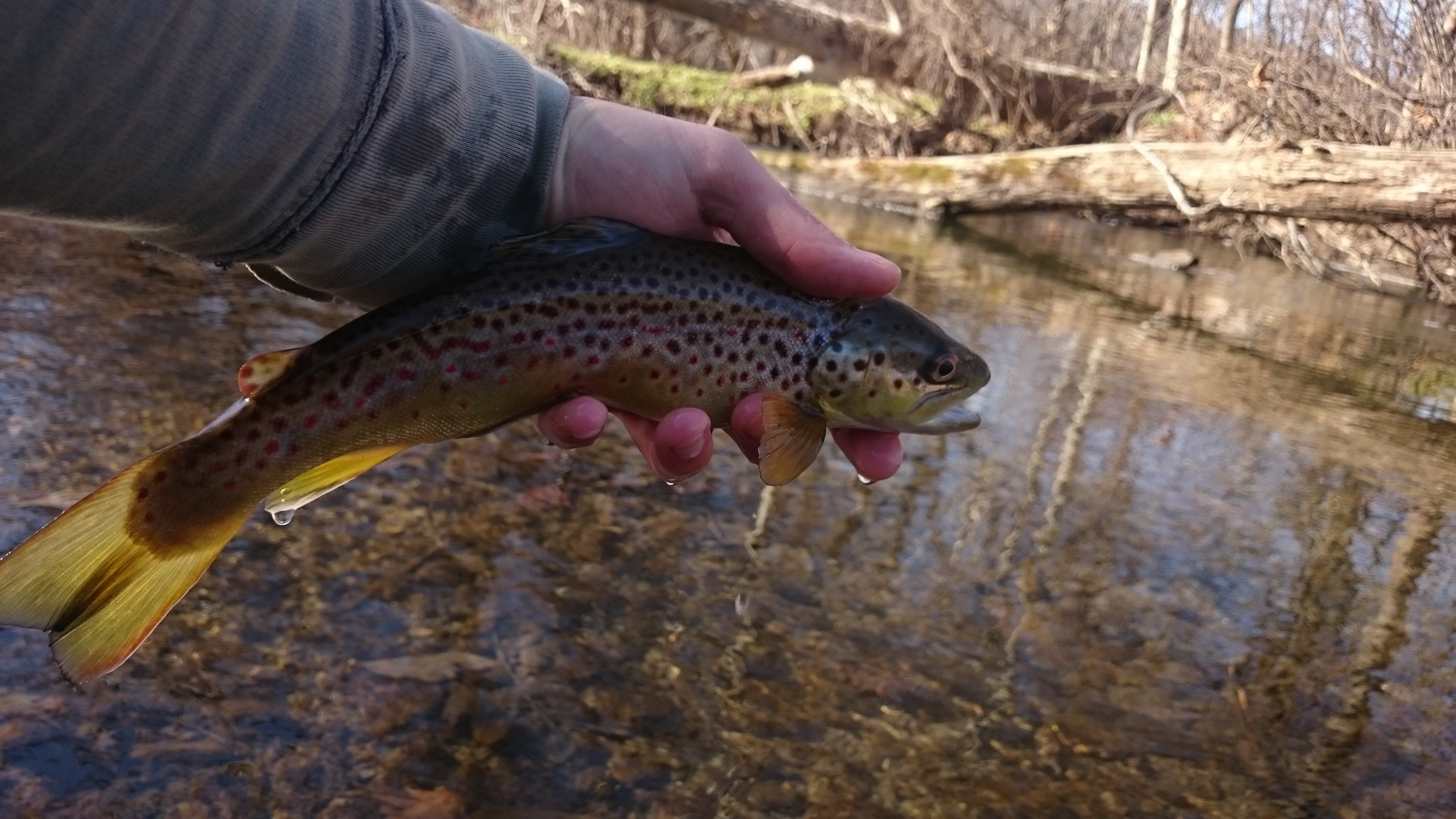 Best winter fly fishing trout haven for Winter trout fishing