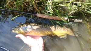 Pennsylvania Trico Hatch Spruce Creek Fly Fishing Central PA Wild Brown Trout