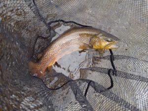 Winter Streamer Fishing in NJ