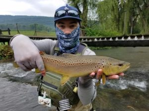 terrestrial dry flies spruce creek trout haven brown trout