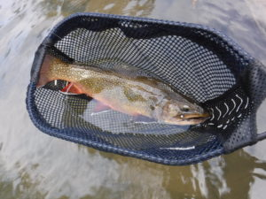 Best Pennsylvania Dry Fly Fishing Spruce Creek PA Trout Haven Brookie