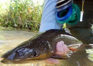 terrestrial dry flies spruce creek trout haven brook trout