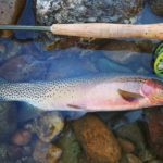 Missoula MT guided fly fishing trip