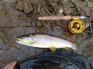 Fly Fishing Little Lehigh Creek PA Trout Haven