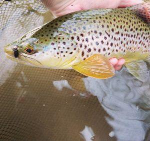 Fly Fishing Little Lehigh Creek PA Trout Haven
