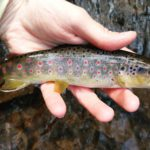 Small Stream PA Guided Fly Fishing Trout Haven Lehigh Valley