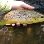 Soft Hackles Late Spring PA Fly Fishing Trout Haven
