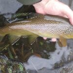 Little Lehigh Creek PA Guided Fly Fishing Trip