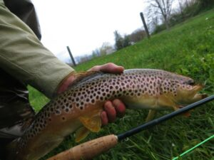 MAY PA fly fishing trout haven spruce creek