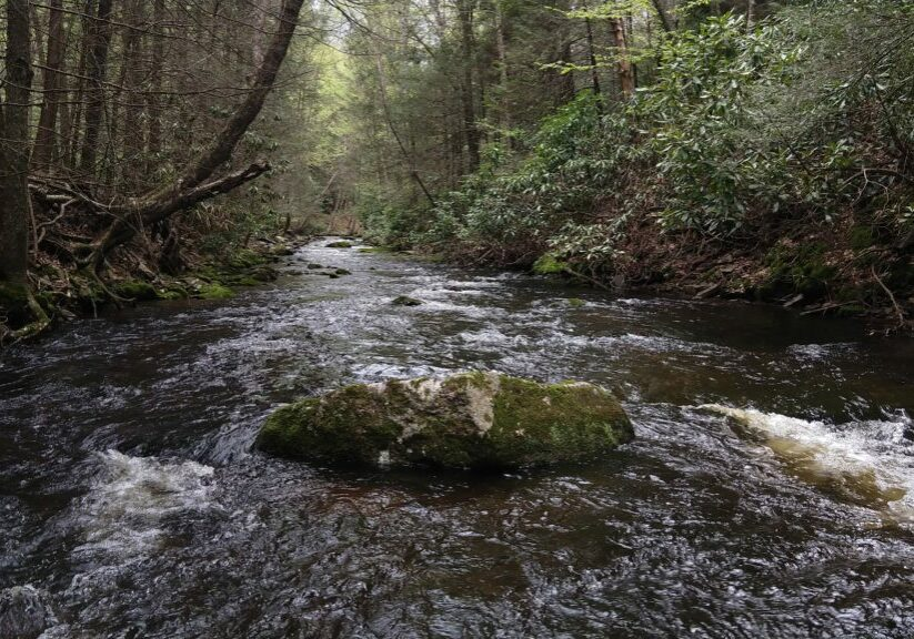Small Stream PA Guided Fly Fishing Trip Trout Haven Lehigh Valley